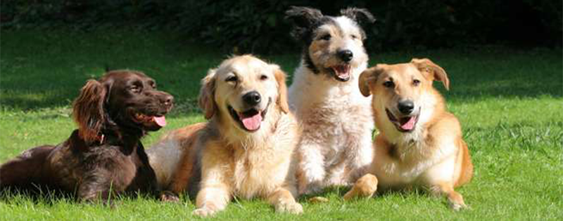 dogs-page-header